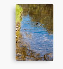 Downward Duck in Swirly Waters Canvas Print