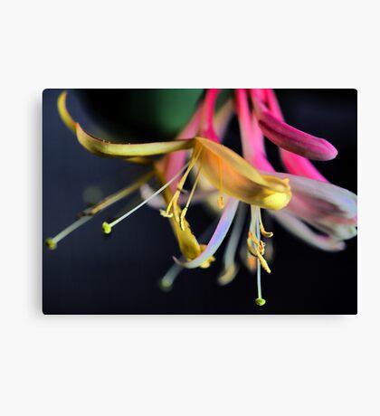 Gold Flame - Honeysuckle Canvas Print