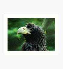 Stellars Sea Eagle - Father Art Print