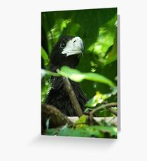 Stellars Sea Eagle - Baby Greeting Card