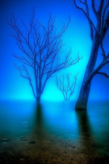 Foggy Dawn at Lake Eildon #3 by Jason Green