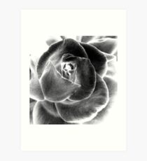 Altered Rose Art Print