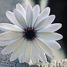 White beauty by Sangeeta