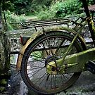 Taiwan Moss Bicycle by Spidermike