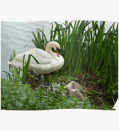 Motherhood at Kew Gardens London UK Poster
