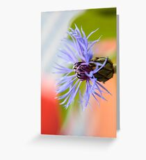 Blossom of a Cornflower Greeting Card