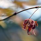 Hangning by a moment in time by Tamara Bush