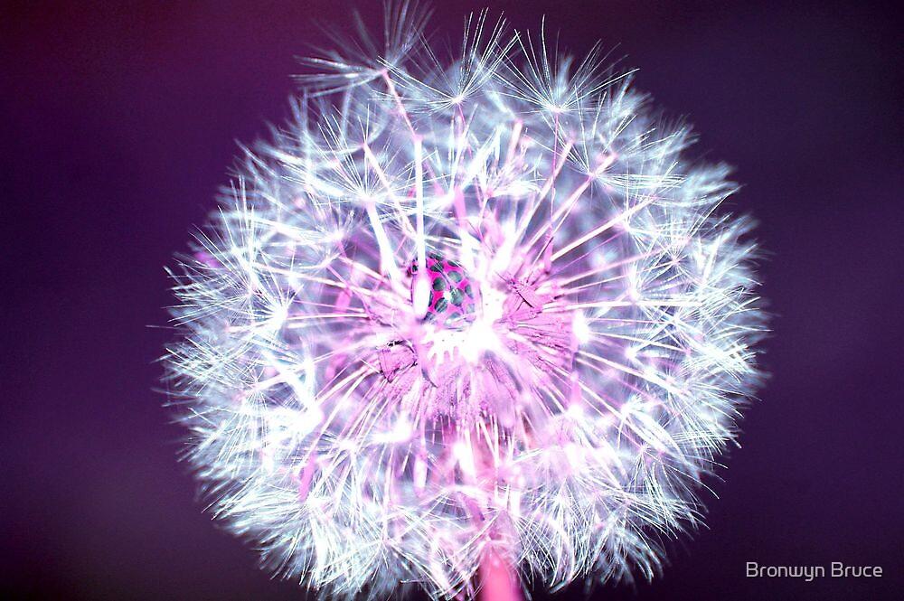 I love sparklers! by Bronwyn Bruce