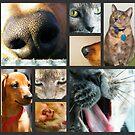 Pet Parts by BShirey