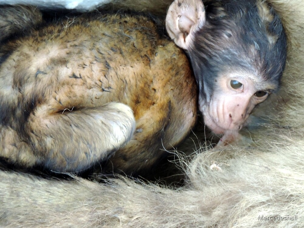 Baby Monkey of Gibraltar by Mercedeshall