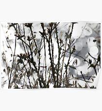 Wild flora X 4991 Poster