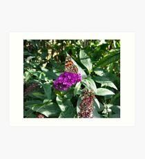 Butterfly in the Budlea Bush. Art Print