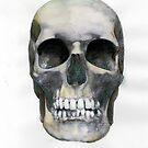 Skull (watercolor) by tsena74