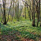 «Encantadoras flores blancas en el suelo del bosque» de Vicki Spindler (VHS Photography)