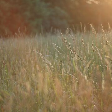 Field of Grass by amaniacadored