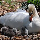 Mother and babies by patapping