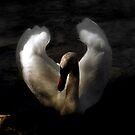 As passionate as Flamenco Dancer by Brian Bo Mei