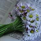 daisy by danapace