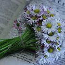 daisy by dagmar luhring