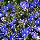 blue.. by dagmar luhring