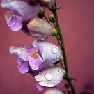Palmer's Penstemon by Brian Hendricks