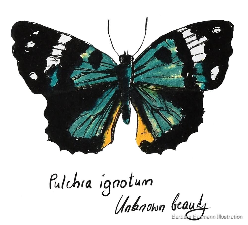 Grüner Schmetterling Pulchra ignotum von Barbara Baumann Illustration