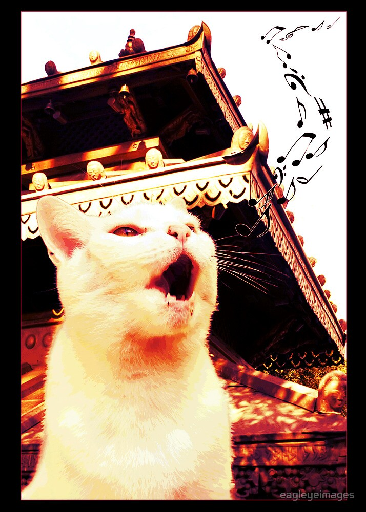 Buffy the Cat Hits The High Notes by eagleyeimages