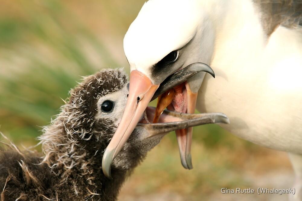 Mmmmm, Good...Calamari Again! by Gina Ruttle  (Whalegeek)