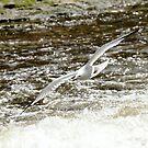 Jonathan Livingston Seagull by jules572