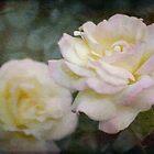 Rose 342 von secretgardener
