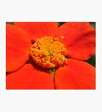 orange macro Photographic Print
