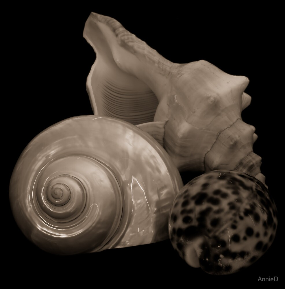 Sepia Shells by AnnieD