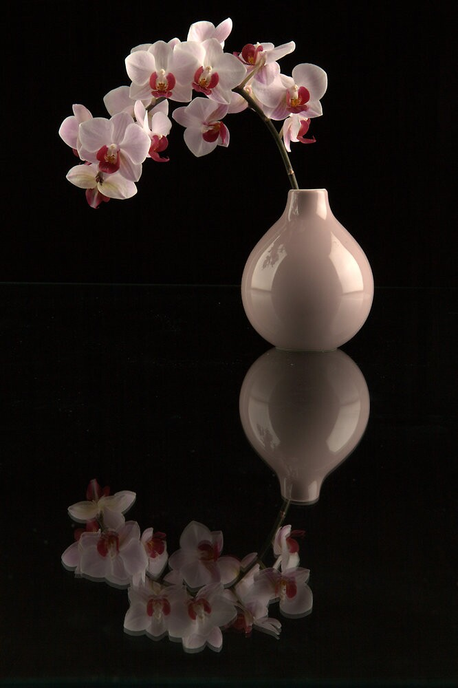 pink orchids reflected by purpleminx