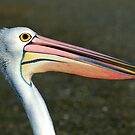 "'' Pelican  Marlo Vic "" by helmutk"