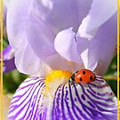 Iris and Lady ... by Eugenio