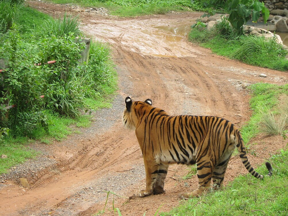 Tiger, tiger by crazybeakz