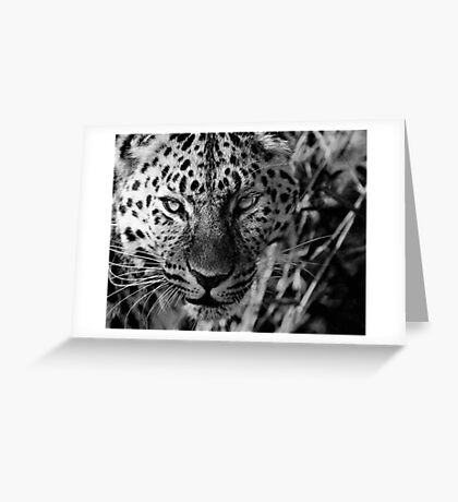 Leopard in Black and White Greeting Card