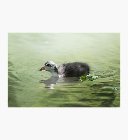What a lovey day for a swim Photographic Print