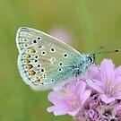 Butterfly by Kasia Nowak