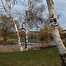 Birch tree 1 by JMR-ART