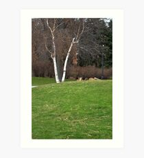 Birch tree 3 Art Print