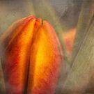 Budding tulip in morning mist by Celeste Mookherjee