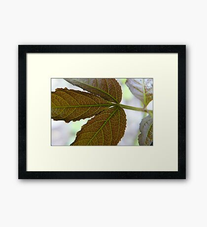Leaf X-ray,...See My Veins Framed Print