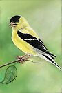 Goldfinch Pastel by Charlotte Yealey
