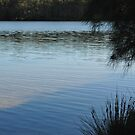 Narrabeen Lake by Amber Edwards