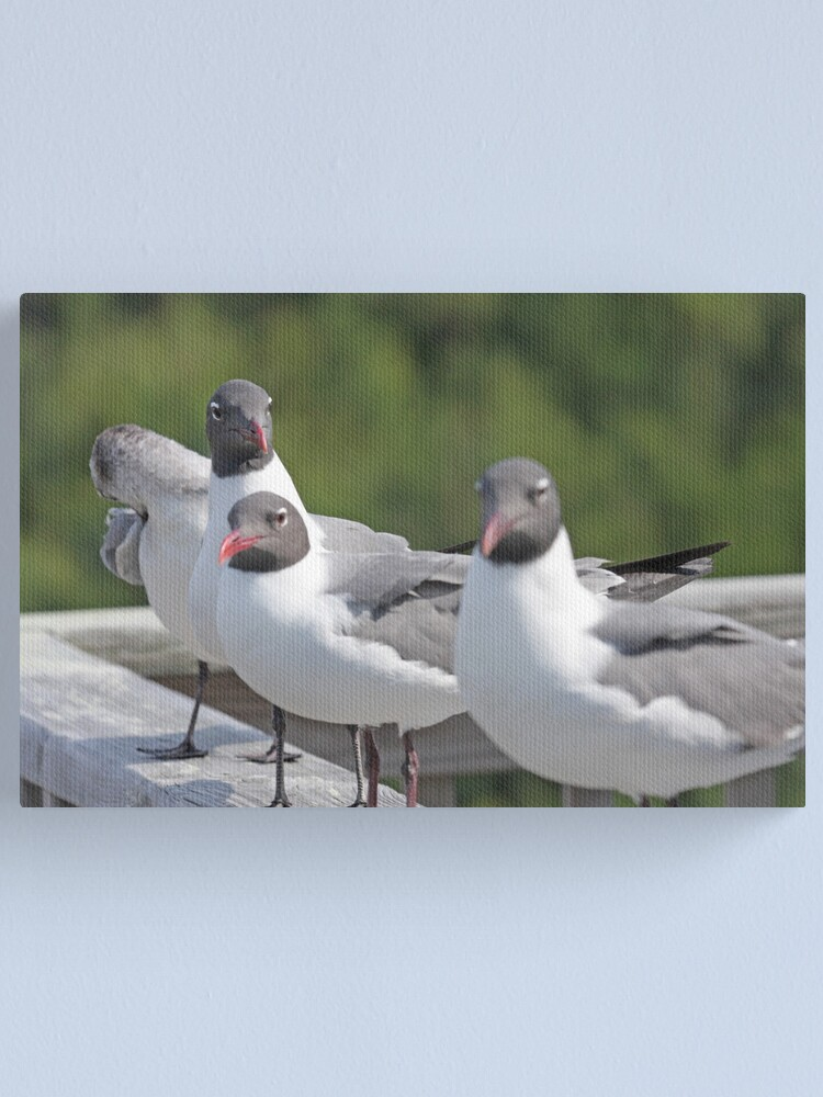 Alternate view of Seagulls Canvas Print