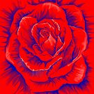 Red Rose by mrsketchy