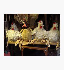 Humourous Chickens Photographic Print