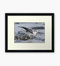 Sea Gull Getting Wet Framed Print
