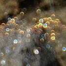 Droplets by peacegirl
